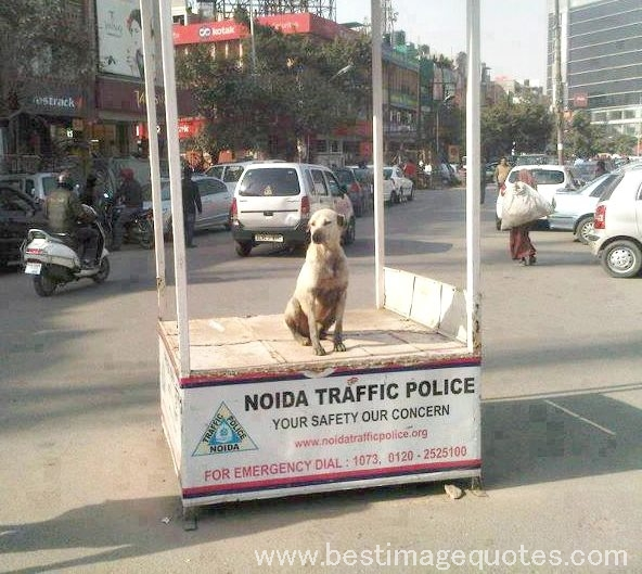 Title: Traffic Police in India [Funny Picture]