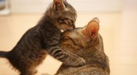 Cute Cat; Happy Mother's Day Special Picture