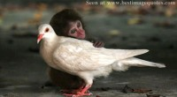 Stop being so racist; Monkey and the Bird [Picture]