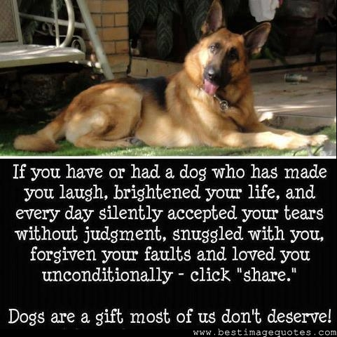 If you ever have or had a dog who has made you laugh-dog quotes